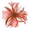 Molly and Rose Biots and Beads Aliceband Fascinator in Coral