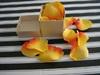Boxed confetti Apricot