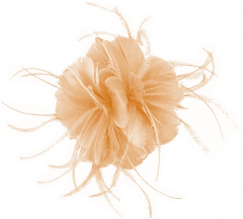 Failsworth Millinery Feather Fascinator in Apricot